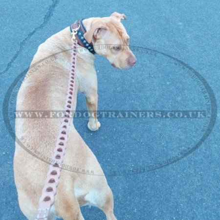 Designer Dog Lead Leather Chain