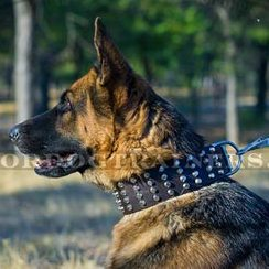 Great Studded Dog Collar for German Shepherd 2 2/5 inch wide