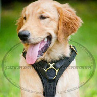 Agitation Padded Leather Dog Harness with Brass Fitting
