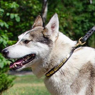 NEW Fashion Dog Collars for Alaskan Husky