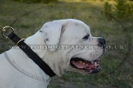 "Effective Choke Collar For Bulldogs Braided Design ""Rattlesnake"""