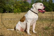 """Large Snake"" Stylish Leather American Bulldog Choke Collar 0.5 In Width"