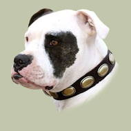 Dog Leather Collar for Bulldog | American Bulldog Collars UK