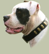 American Bulldog Accessories: Leather Dog Collars UK Best Style
