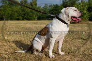 "Classic Leather Dog Collar For American Bulldog ""Noble Pet"" 1"" Width"