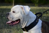"""Easy Control"" Agitation Dog Collar For American Bulldog With Handle"