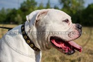"""Twice As Nice"" Adorned Dog Collar For American Bulldog 1 In Width"