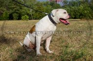 """Spiked Holiday Collar"" Awesome Leather Dog Collar For American Bulldog"