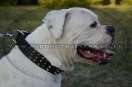 """Vivid Flash Of Lightning"" High-Quality Leather Dog Collar For American Bully"