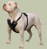 American Bulldog Harness | NEW Padded Leather Harness UK