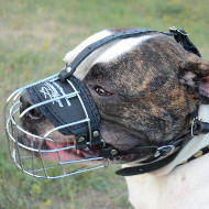 American Bulldog Muzzle UK | Best Wire Dog Muzzle for Bulldog