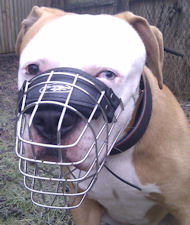 American Bulldog Muzzle Best Design | Basket Dog Muzzle UK
