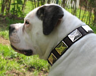 American Bulldog Collars with Vintage Plates | Large Dog Collars