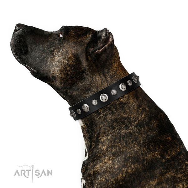 Buy Collars for Staffordshire Bull Terrier Online UK