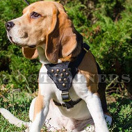 Beagle Harnesses Studded | Small Dog Harnesses for Beagle