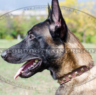 Belgian Shepherd Dog Collar 1"