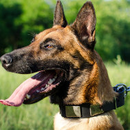 Belgian Shepherd Malinois Dog Collar with Massive Plates