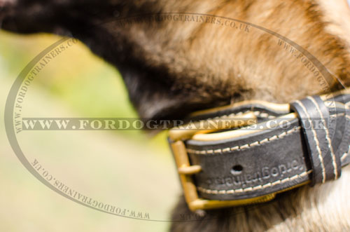 leather dog collar with metal buckle for Belgian Shepherd online UK