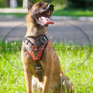 "Belgian Shepherd Malinois Dog Harness ""Flame"""