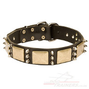 Best Dog Collar for Large Dog Style