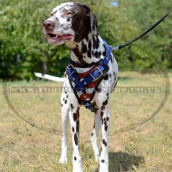 "Best Dog Harness For Dalmatian ""American Pride"""