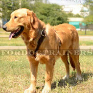 Best Dog Harness for Golden Retriever