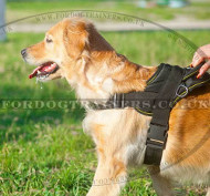 Best Nylon Dog Harness for Universal Use