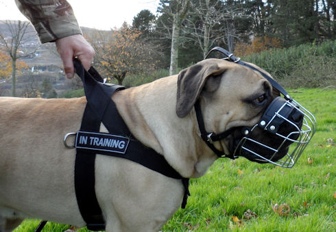 Nylon Dog Harness for Boerboel Mastiff
