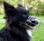 Best design wire dog muzzle for Collie, UK