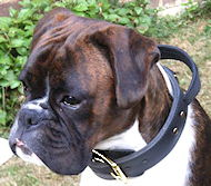 Boxer Collar with Handle | 2 Ply Leather Dog Collar for Boxer
