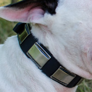 British Bull Terrier Collar with Nickel Plates