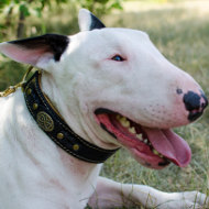 Bull Terrier Collar Royal Design | Padded Collar for Bullterrier