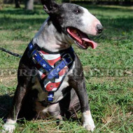 Bull Terrier Dog Harness | Dog Harness with Handle