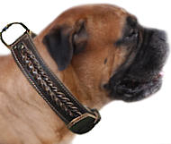 Bullmastiff Dog Collar | Braided Leather Dog Collar for Big Dog