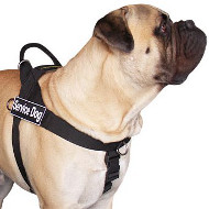 Bullmastiff Training Harness | Dog Training Harness, Anti-Pull