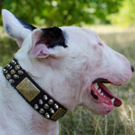 Collar for English Bull Terrier | Bullterrier Collar New Style