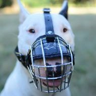 Metal Wire Dog Muzzle for Bull Terrier