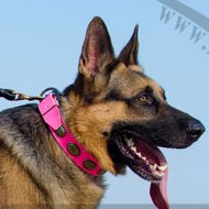 BEAUTIFUL GERMAN SHEPHERD PINK COLLAR FOR DOGS