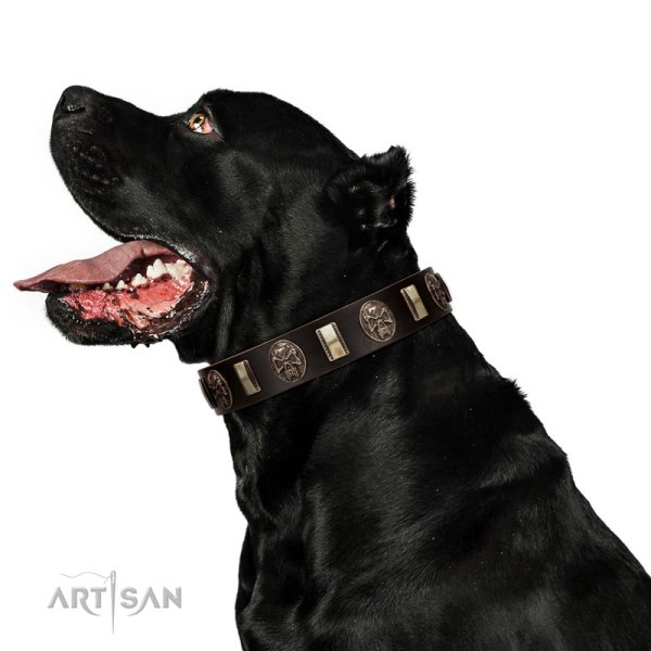 Cane Corso Collars for Big Dogs