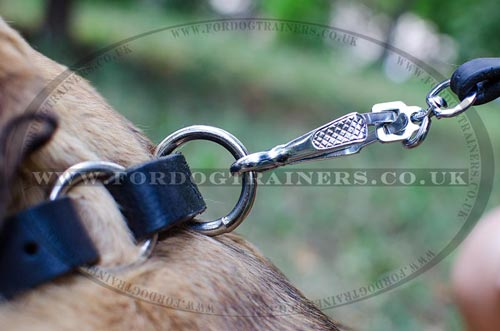 Cane Corso Leather Dog Collar for Training