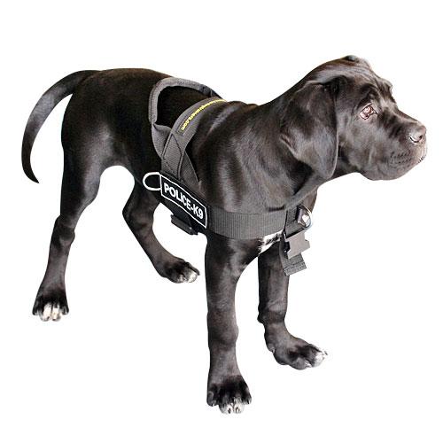 Cane Corso Mastiff Harness Uk Non Pull Dog Harness For