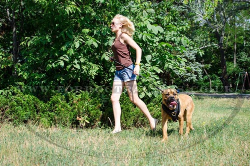 How To Train A Puppy Of Fighting Dog Breeds Dog Muzzle Dog