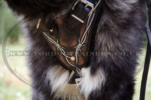 leather dog training harness for Caucasian Shepherd