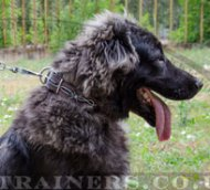 "Caucasian Shepherd Elite Big Dog Collar ""Barbed Wire"""