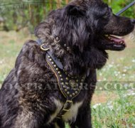 Handcrafted Large Studded Dog Harness for Caucasian Shepherd
