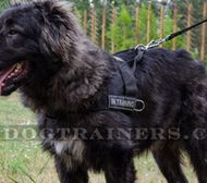 Caucasian Shepherd Non Pulling Dog Harness with Front D-ring