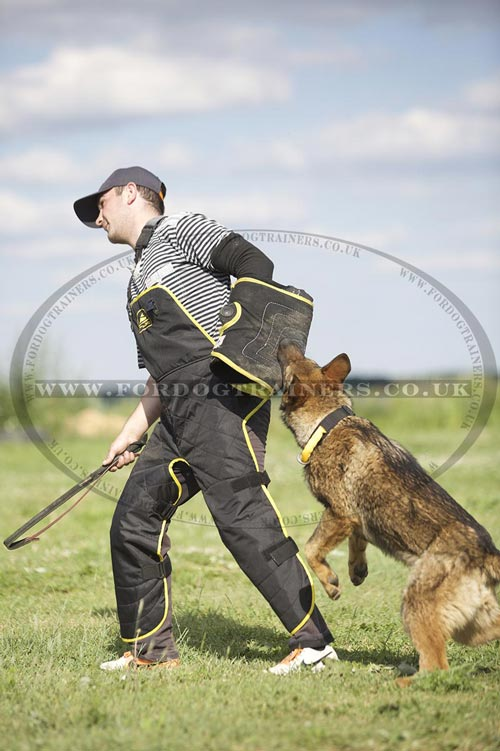 Command Training for Dog Agility and Health