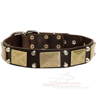 Cool Dog Collar Studded Design for Sale from the Producer!