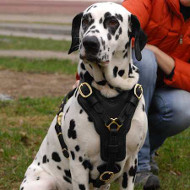 Dalmatian Harness for Dog Comfort | Leather Dog Harness