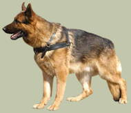 German Shepherd Harness for tracking, pulling and walking
